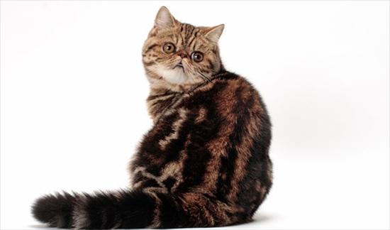 振り向き猫 画像
