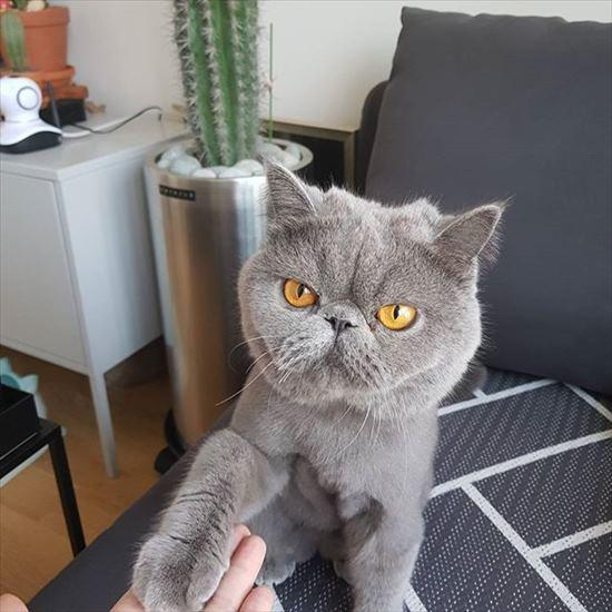 おてする猫画像