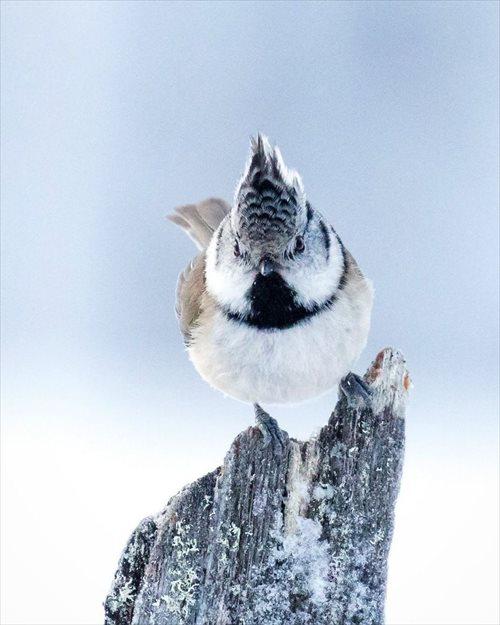 美しい野鳥 写真6