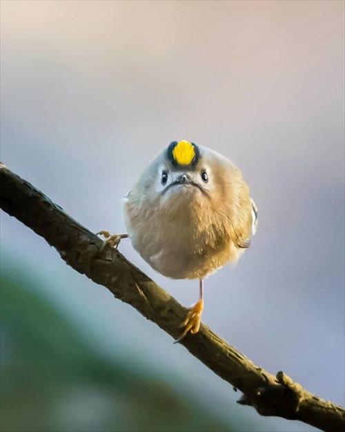 美しい野鳥 写真7