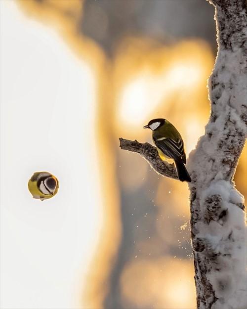 美しい野鳥 写真1