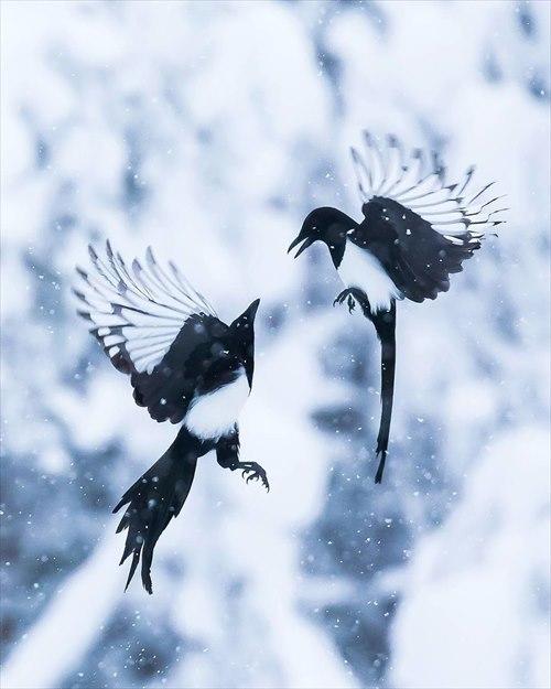 美しい野鳥 写真2