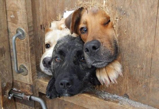 挨拶する犬 写真1