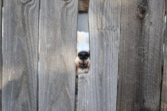 挨拶する犬 写真16