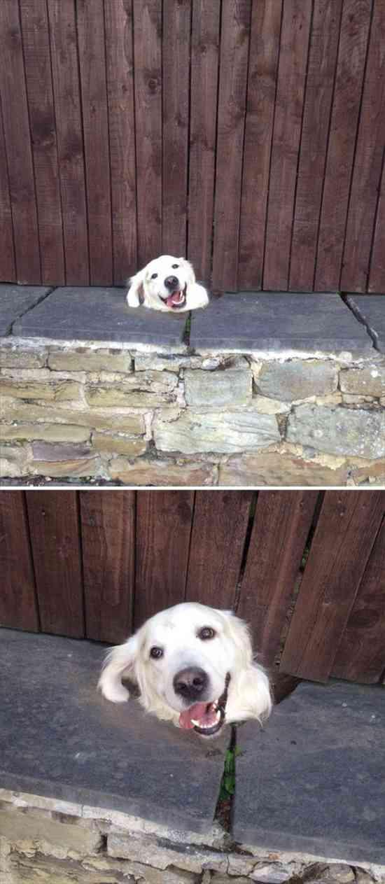 挨拶する犬 写真10