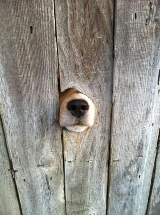 挨拶する犬 写真17