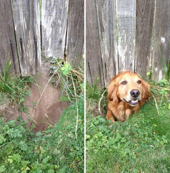 挨拶する犬 写真13