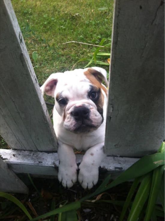 挨拶する犬 写真5