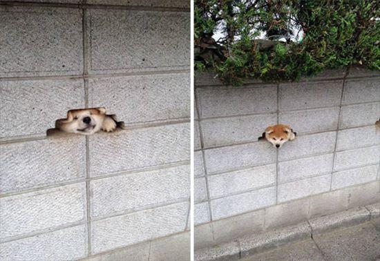 挨拶する犬 写真7