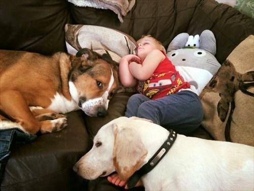 子供とペット 友達写真16