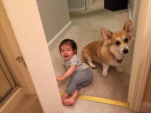 子供とペット 友達写真9