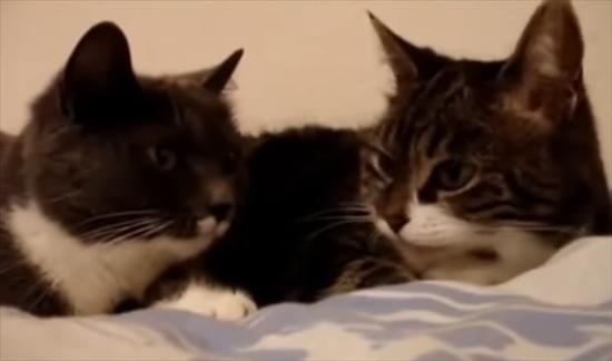 猫同士 会話