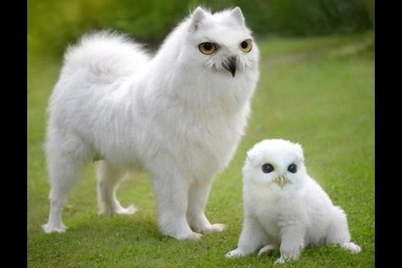 犬と鳥 合成画像1