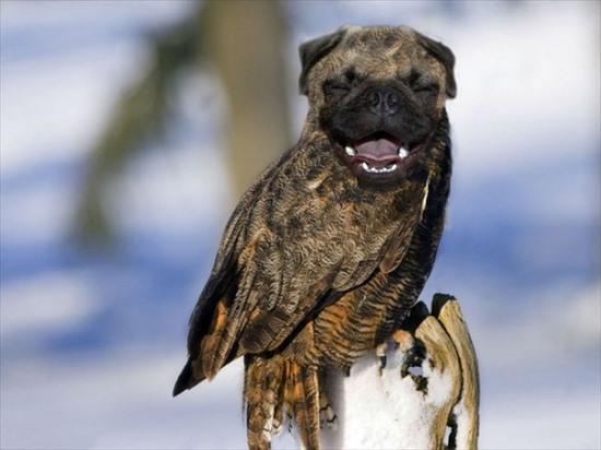 犬と鳥 合成画像6