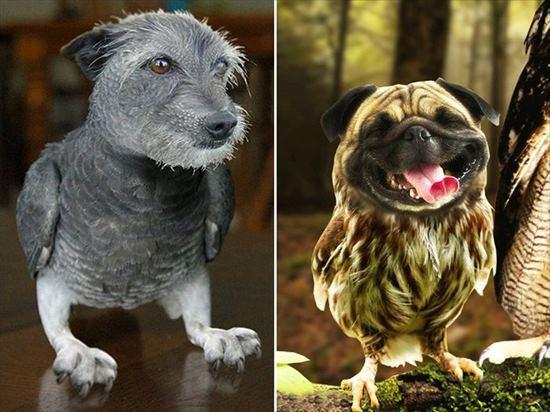 犬と鳥 合成画像8