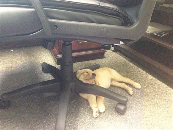 どこでも寝る 犬14