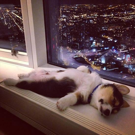 どこでも寝る 犬4