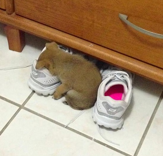 どこでも寝る 犬3