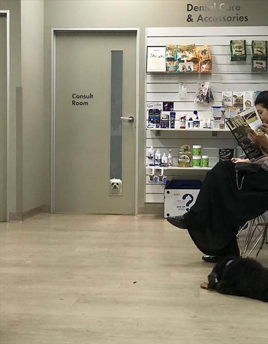嫌いな動物病院 犬12
