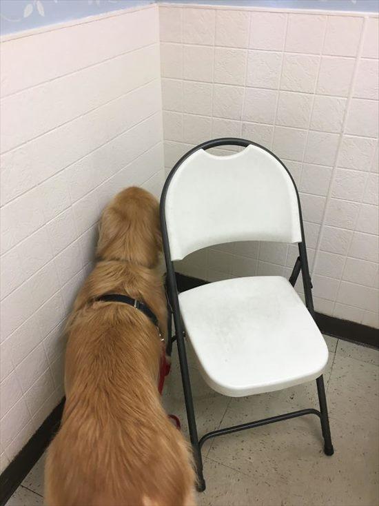 嫌いな動物病院 犬13