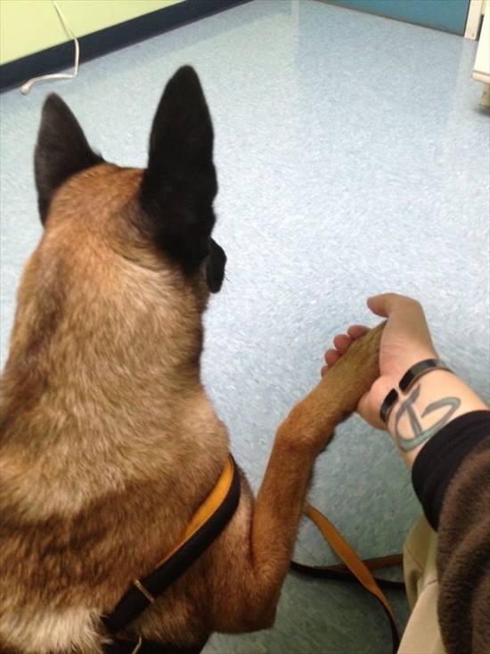 嫌いな動物病院 犬17