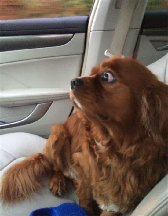 嫌いな動物病院 犬16