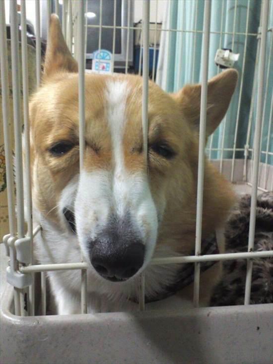 嫌いな動物病院 犬19