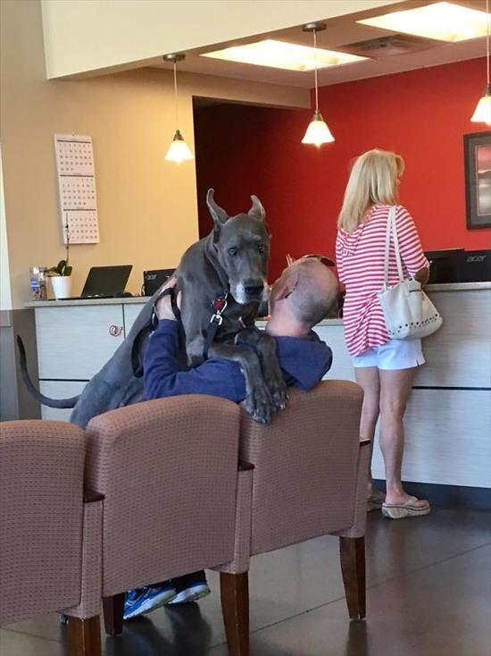 嫌いな動物病院 犬5
