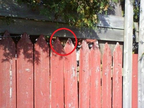 猫は隠れんぼの達人5