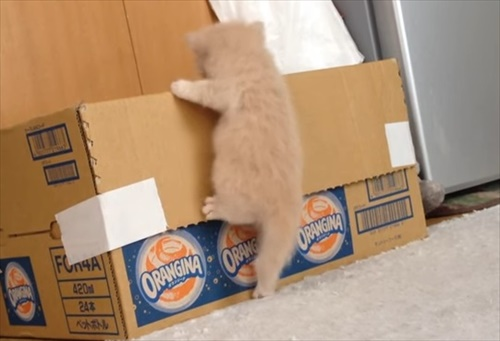 子猫 寝床 応援1