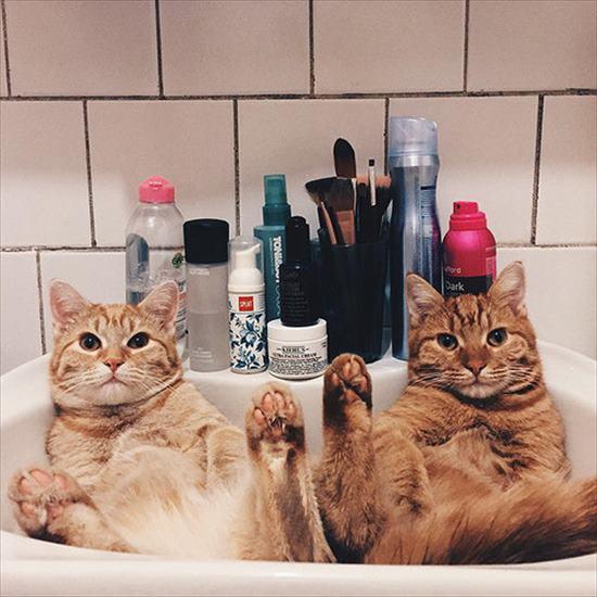 2匹の保護子猫。一緒に仲良く成長していき立派な大人猫に 6