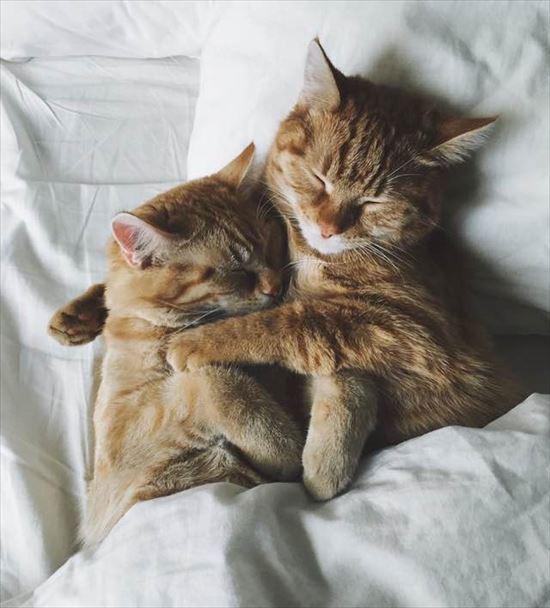 2匹の保護子猫。一緒に仲良く成長していき立派な大人猫に 11