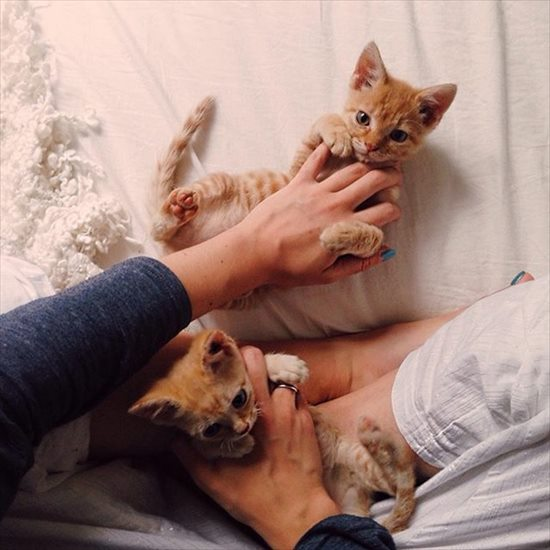 保護して1か月が経った保護猫。勇ましい顔に