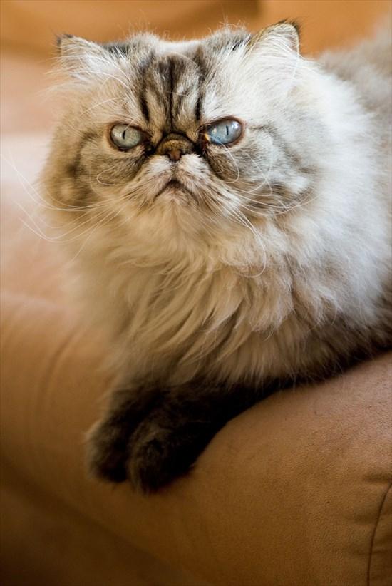 怒り猫 画像11