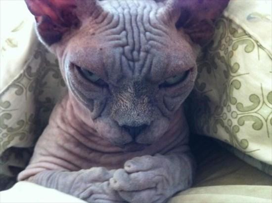 怒り猫 画像12