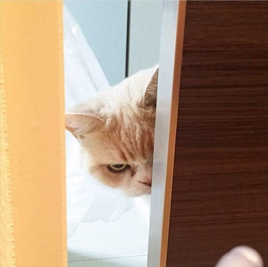 怒り猫 画像14