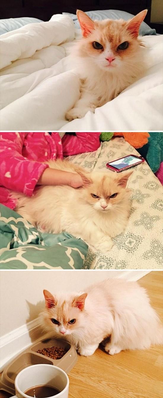怒り猫 画像13
