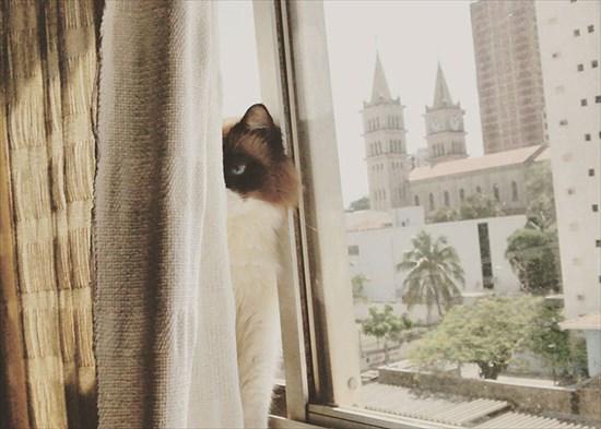 怒り猫 画像7