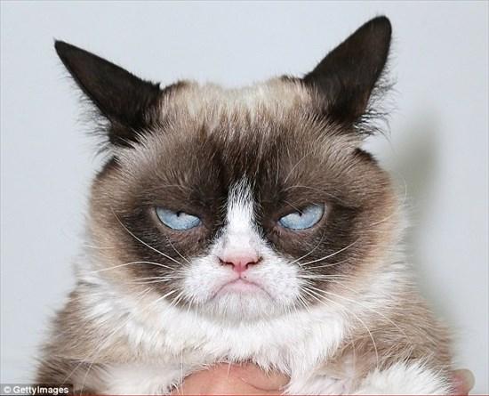 怒り猫 画像8