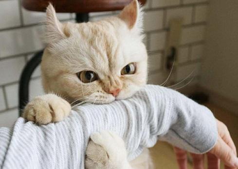 噛み付く猫 写真1