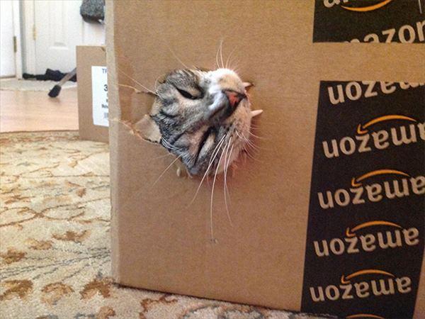 噛み付く猫 写真6