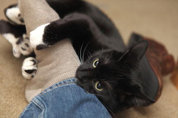 噛み付く猫 写真5