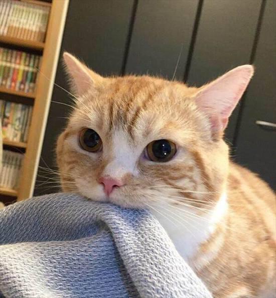 噛み付く猫 写真10