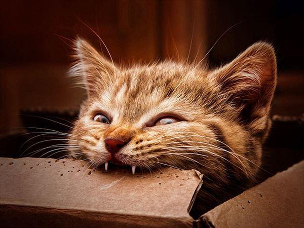 噛み付く猫 写真15