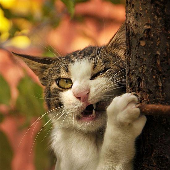 噛み付く猫 写真13