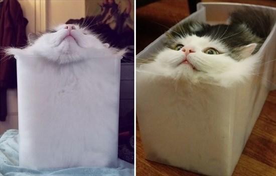 プラスチックケースにフィットする猫1