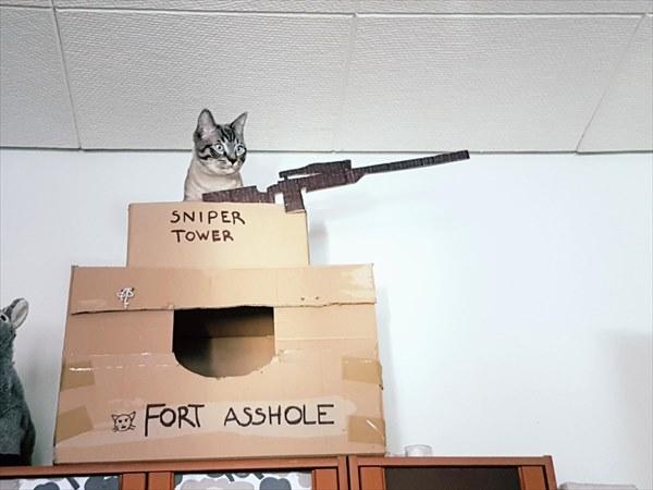 猫 ダンボールハウス2