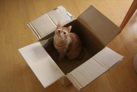 猫 ダンボールハウス1