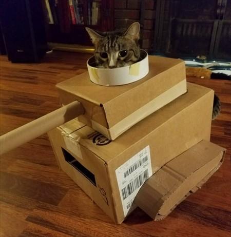 猫 ダンボールハウス3