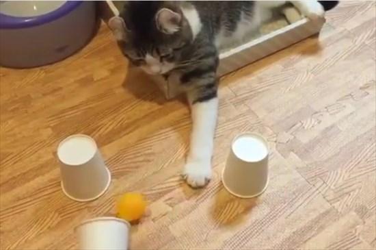 カップシャッフル 猫1